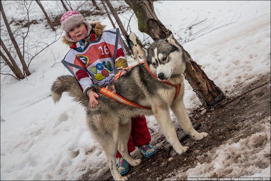 Children and husky. Dog racing on wet ice 03