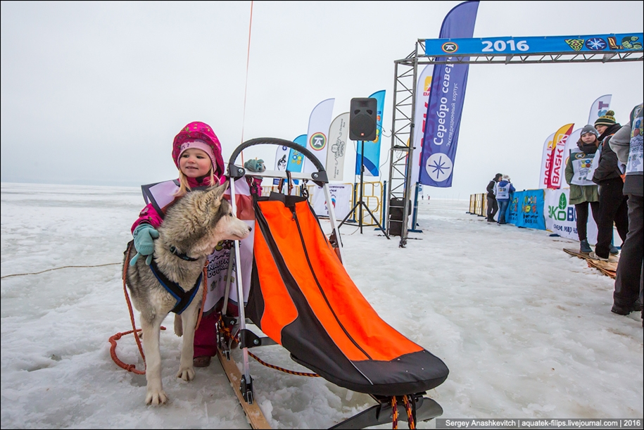 Children and husky. Dog racing on wet ice 04