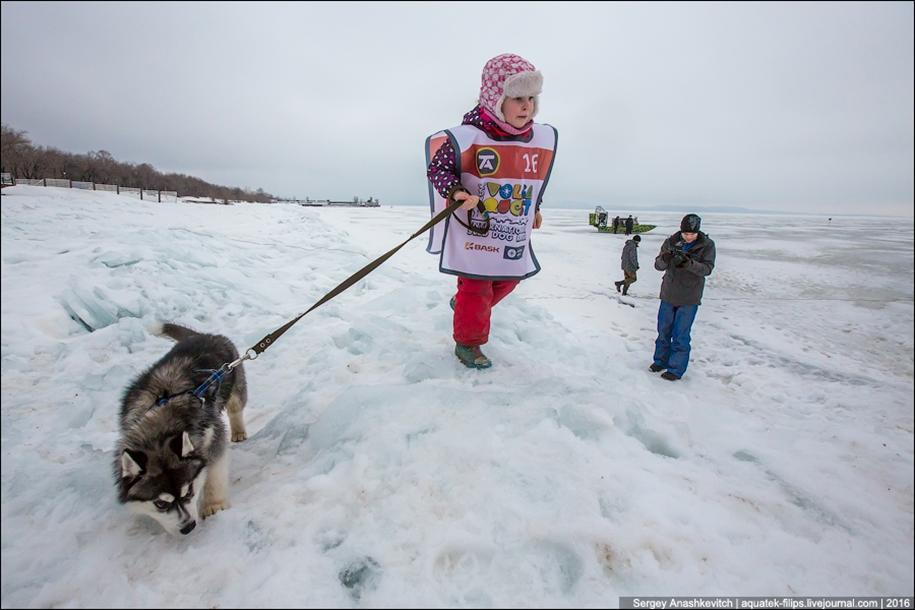 Children and husky. Dog racing on wet ice 05