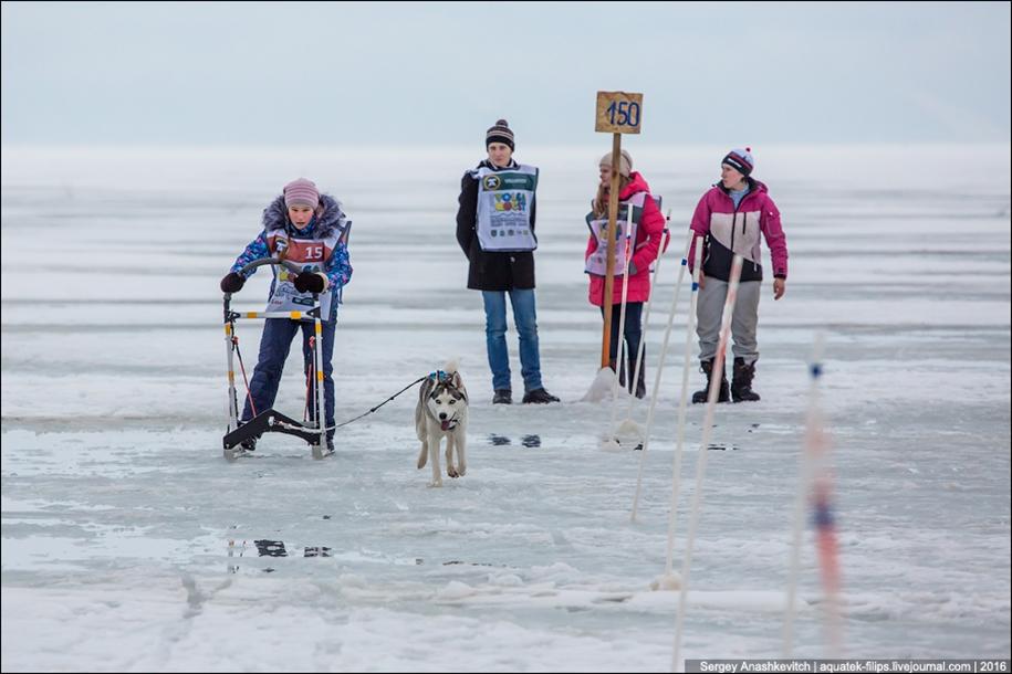 Children and husky. Dog racing on wet ice 07