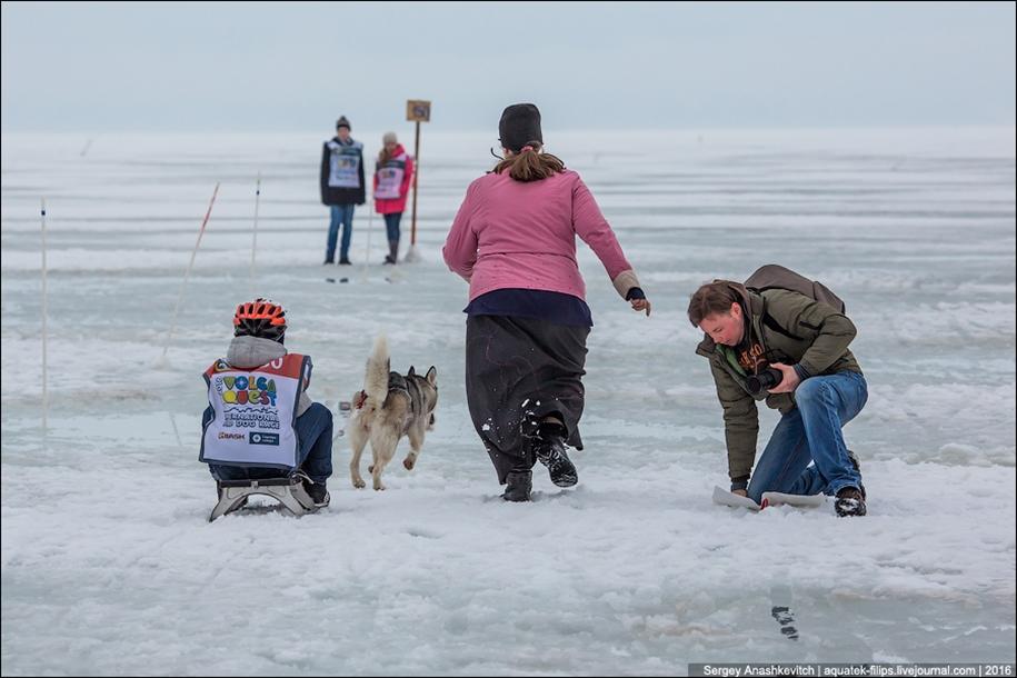 Children and husky. Dog racing on wet ice 15