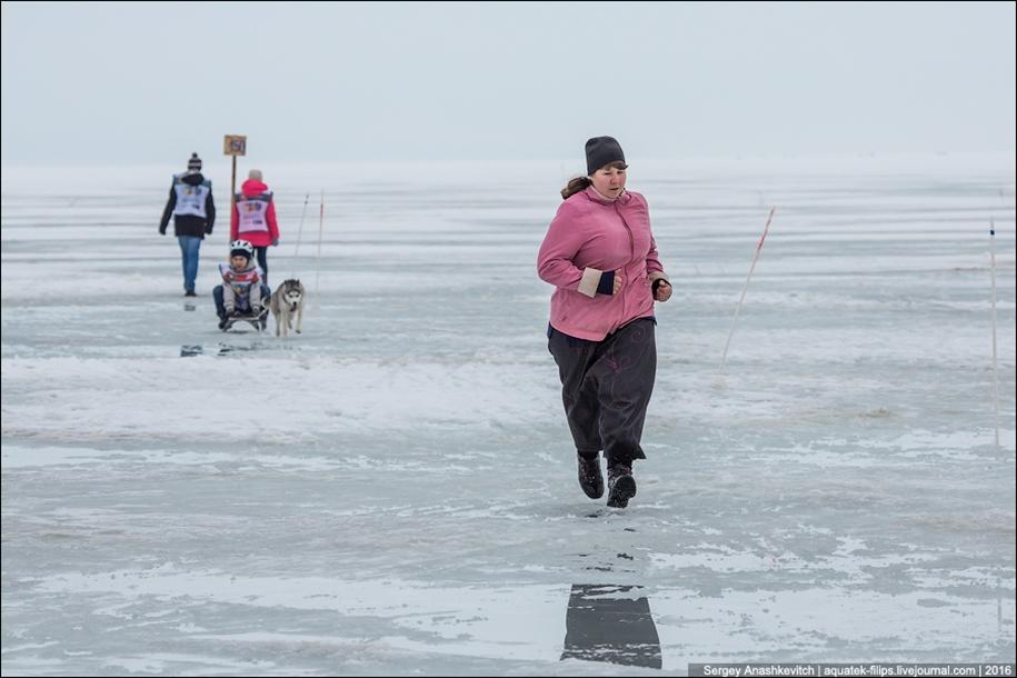 Children and husky. Dog racing on wet ice 16