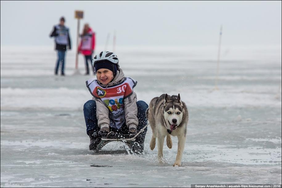 Children and husky. Dog racing on wet ice 17