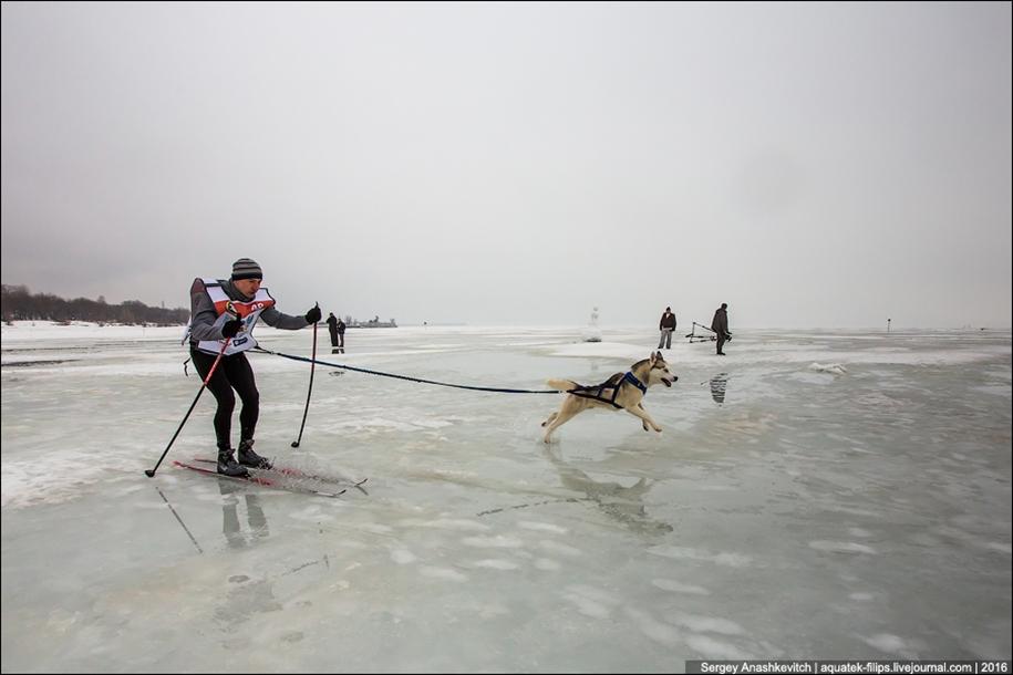 Children and husky. Dog racing on wet ice 19