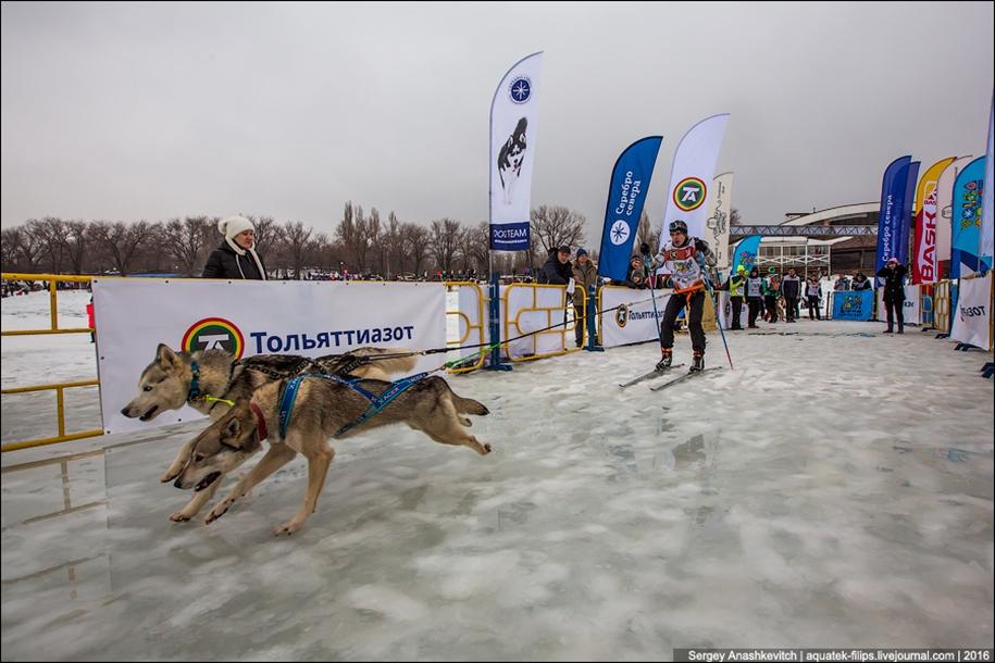 Children and husky. Dog racing on wet ice 20