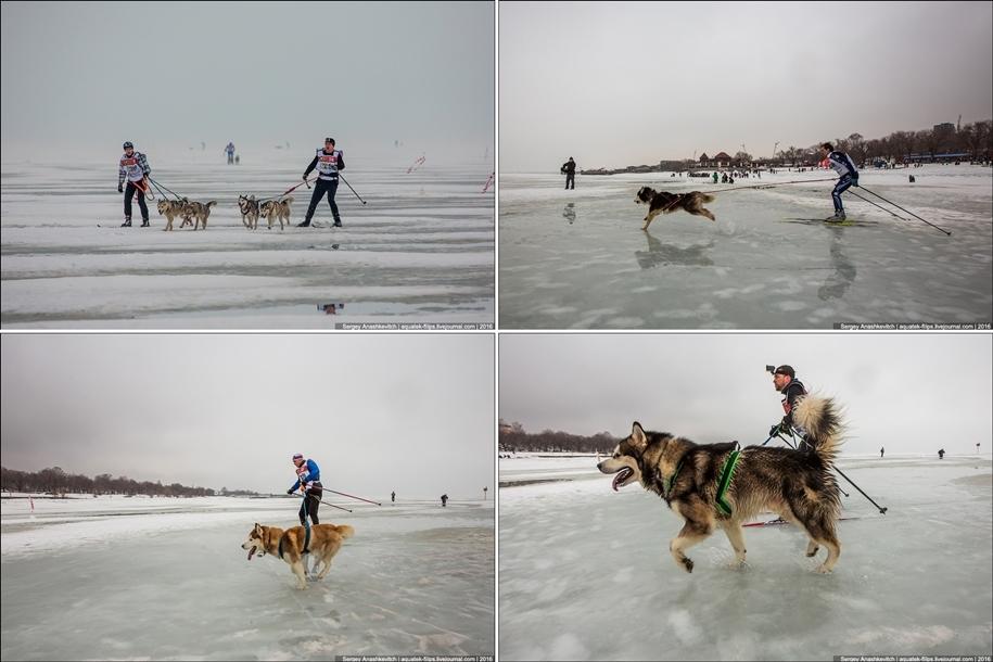 Children and husky. Dog racing on wet ice 21