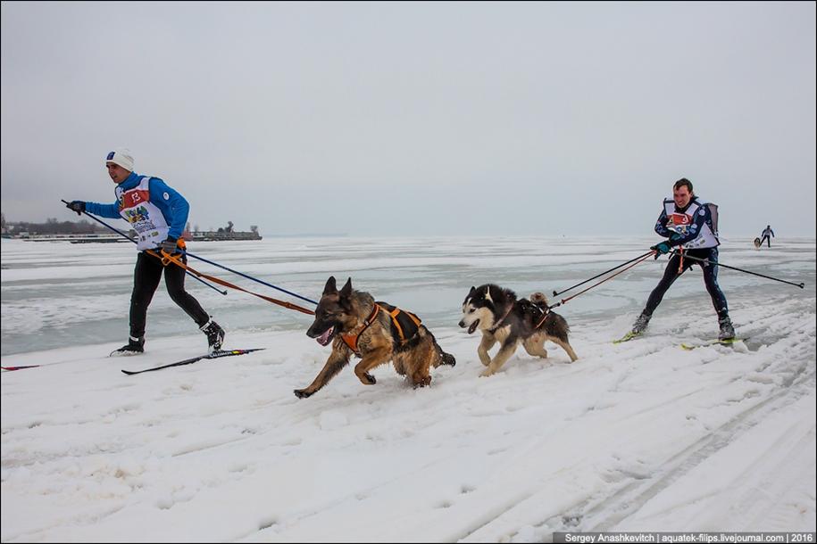Children and husky. Dog racing on wet ice 22