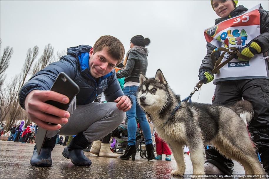 Children and husky. Dog racing on wet ice 24
