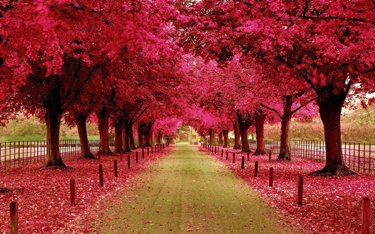 Красочные цвета весны