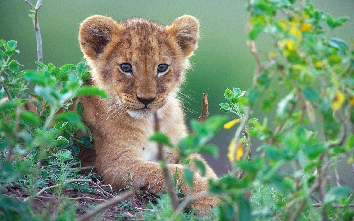 Cute photos of wild cats 05