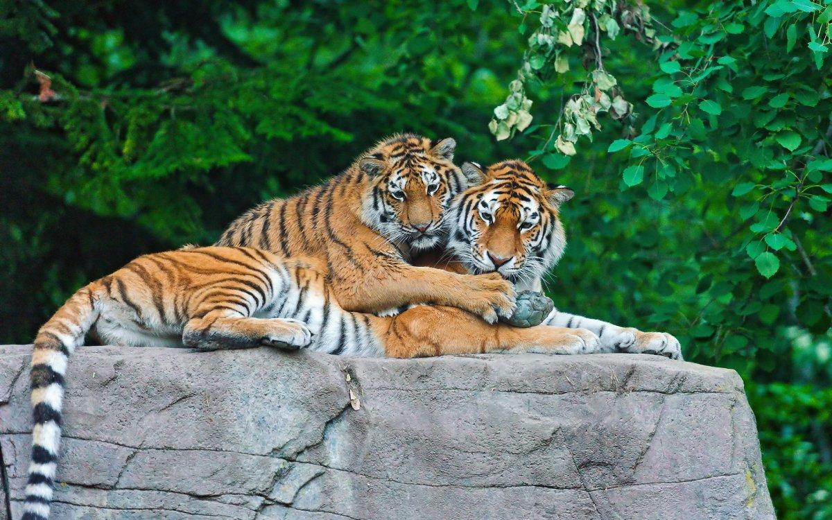 Cute photos of wild cats 06