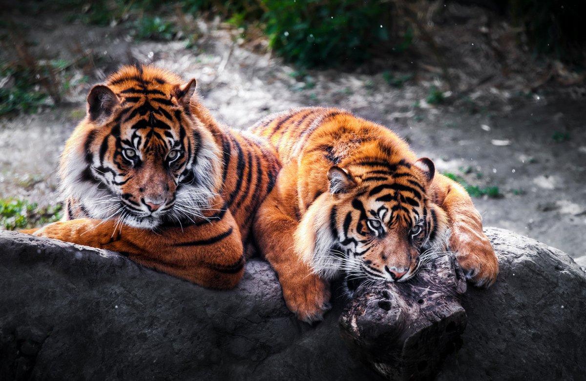 Cute photos of wild cats 07