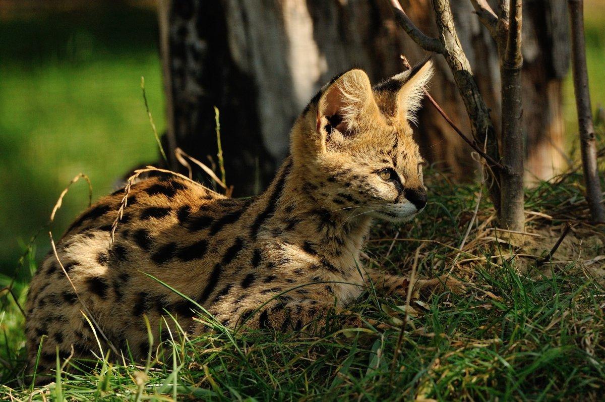 Cute photos of wild cats 08