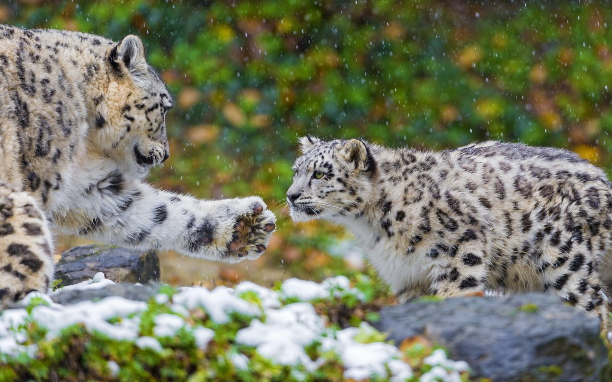 Cute photos of wild cats 10