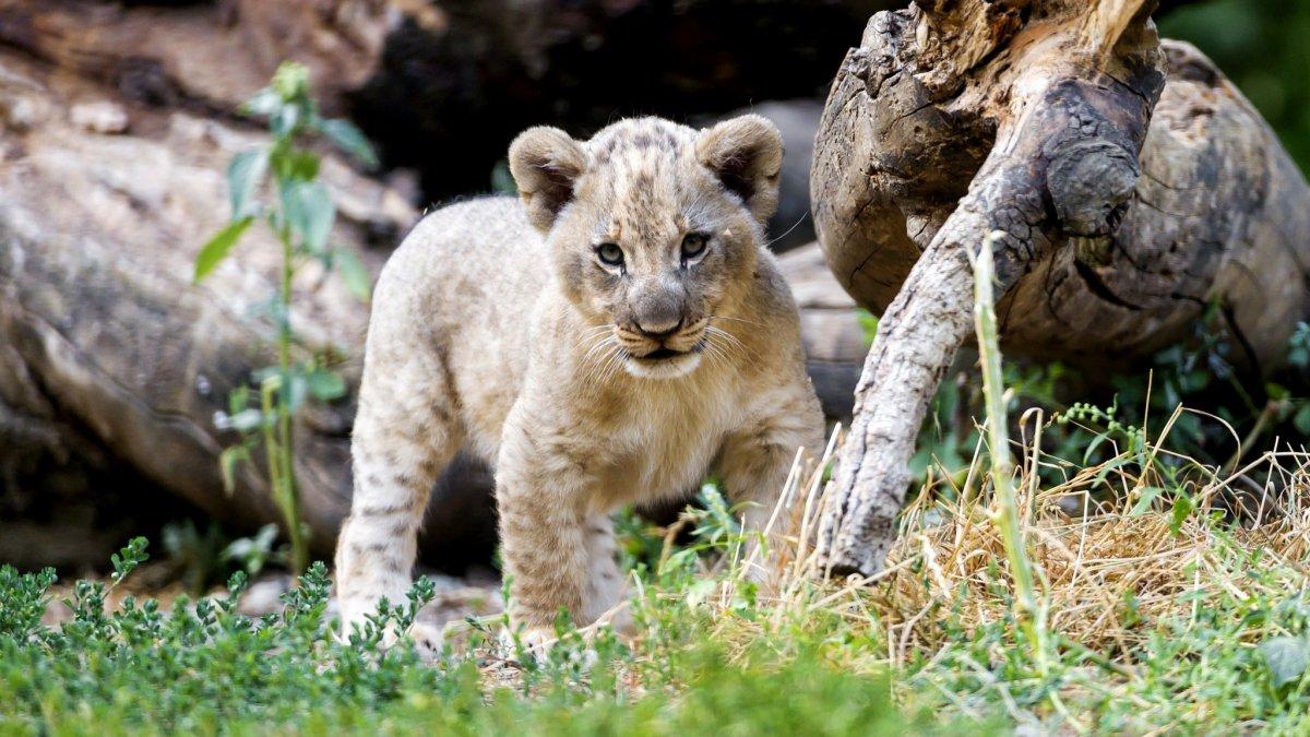 Cute photos of wild cats 11