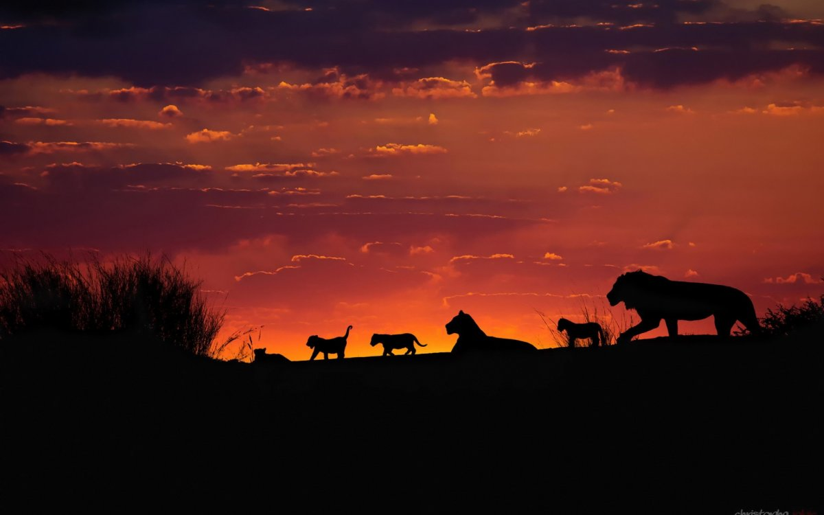Cute photos of wild cats 12