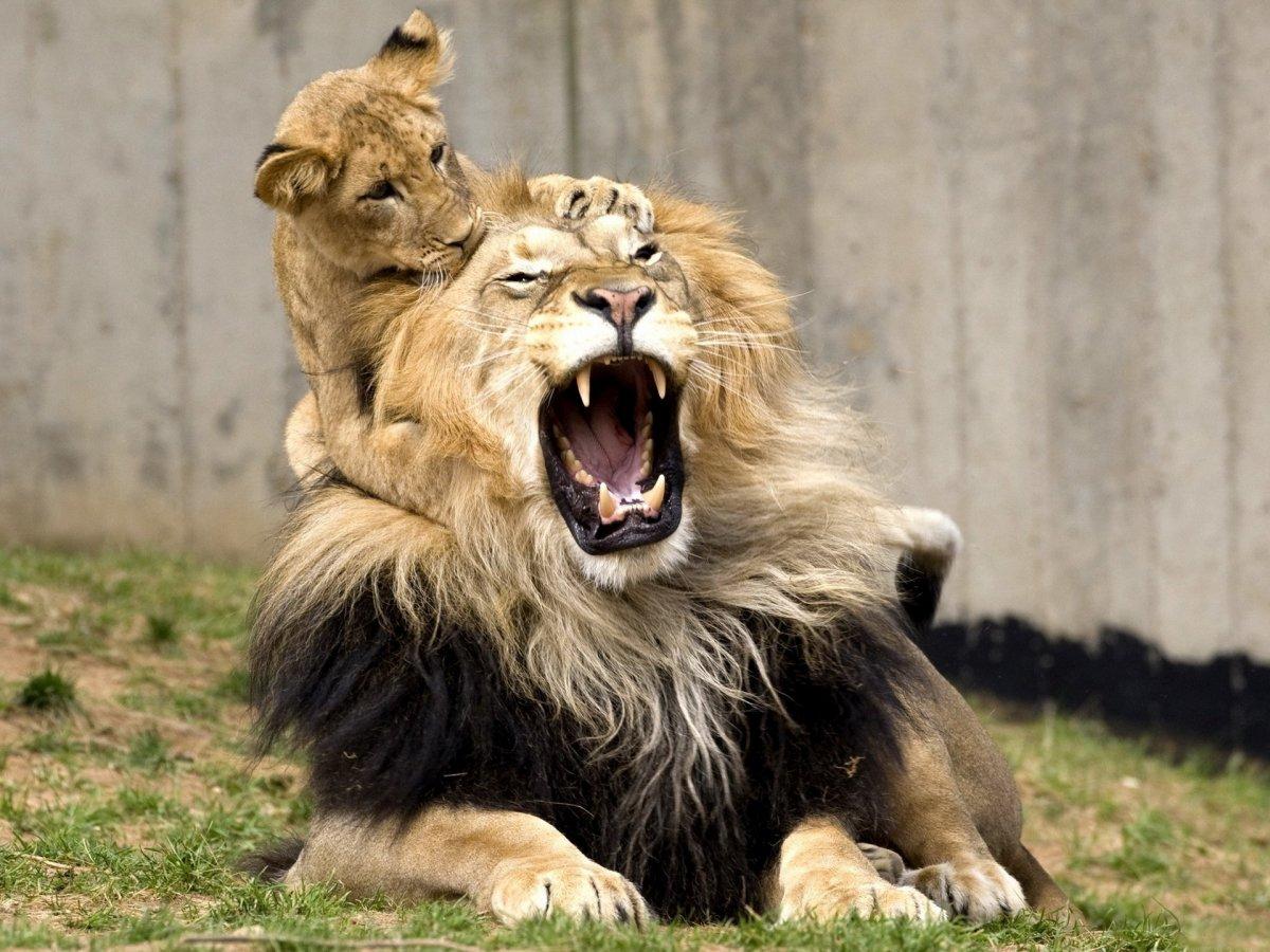 Cute photos of wild cats 13