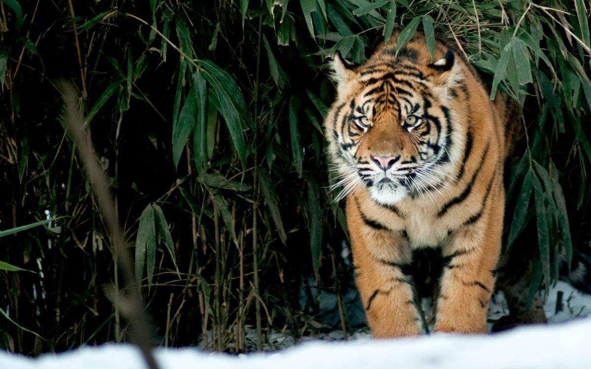 Cute photos of wild cats 14
