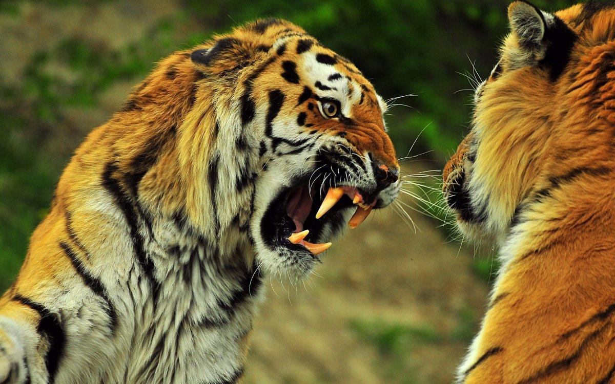 Cute photos of wild cats 15