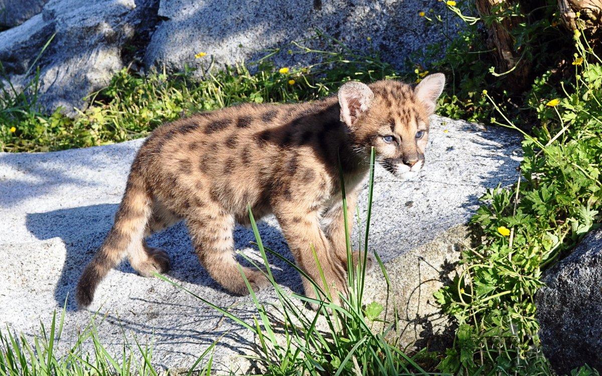 Cute photos of wild cats 16