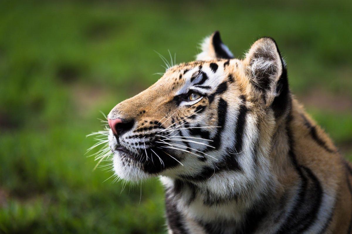Cute photos of wild cats 18