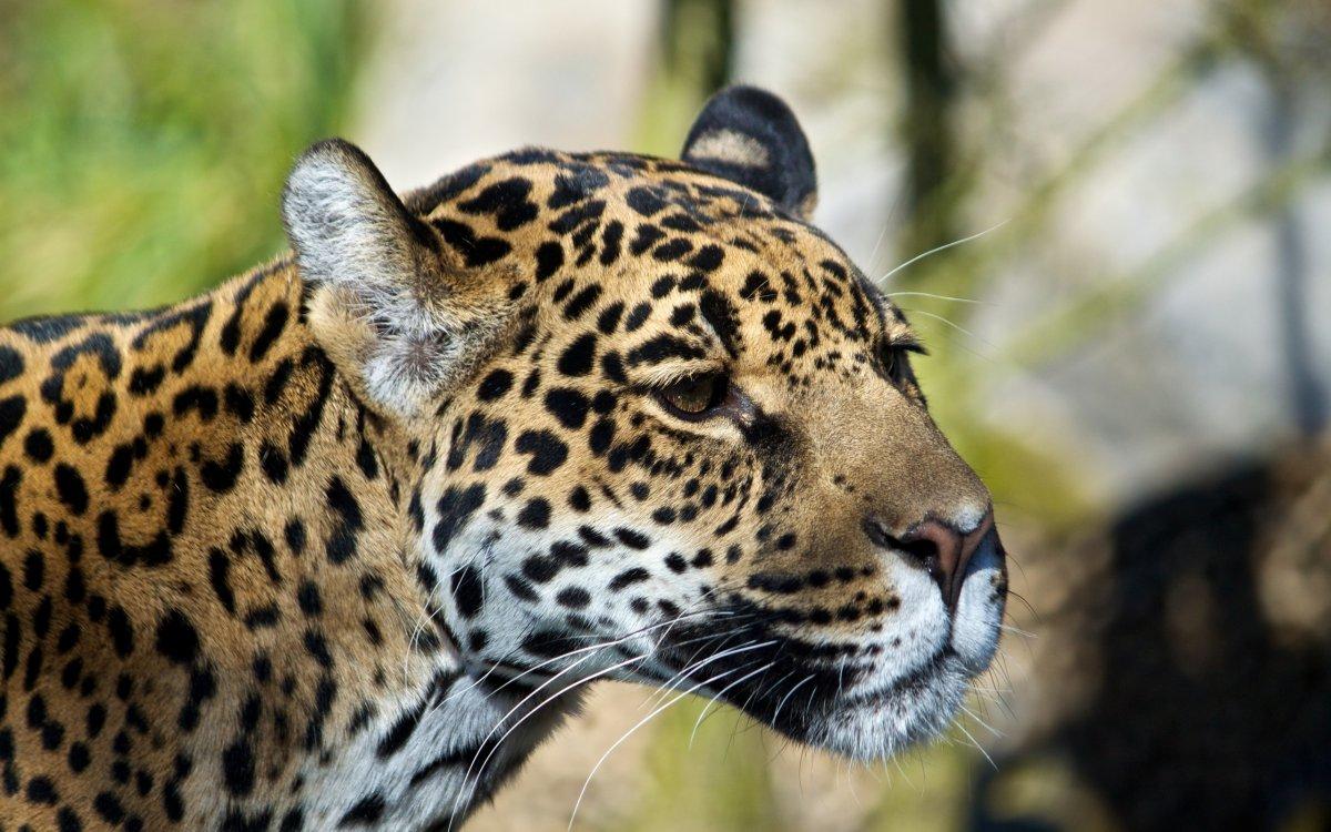 Cute photos of wild cats 21