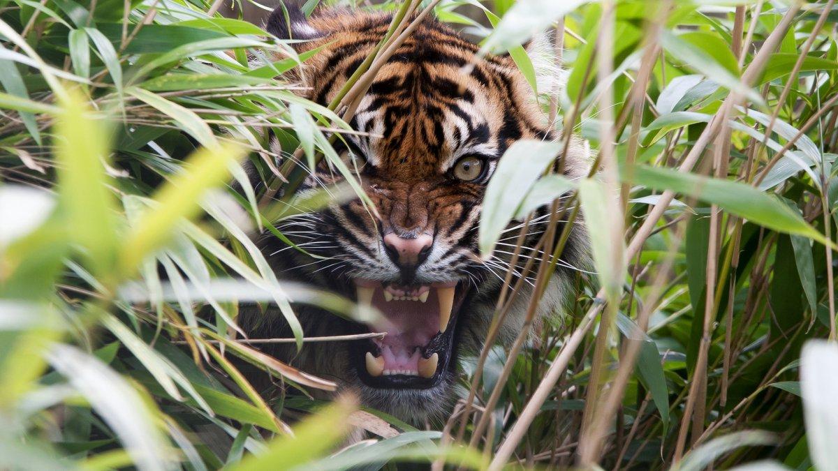 Cute photos of wild cats 22