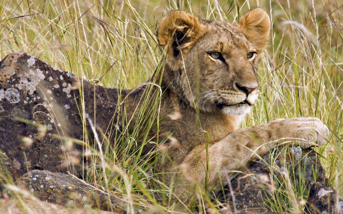 Cute photos of wild cats 23
