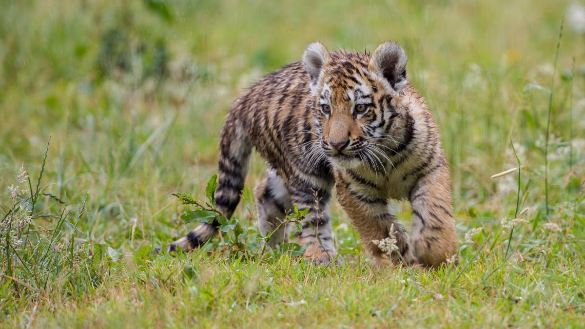 Cute photos of wild cats 24