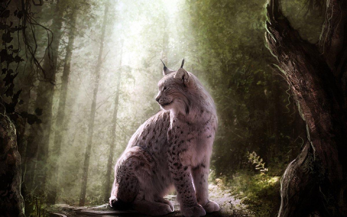 Cute photos of wild cats 25