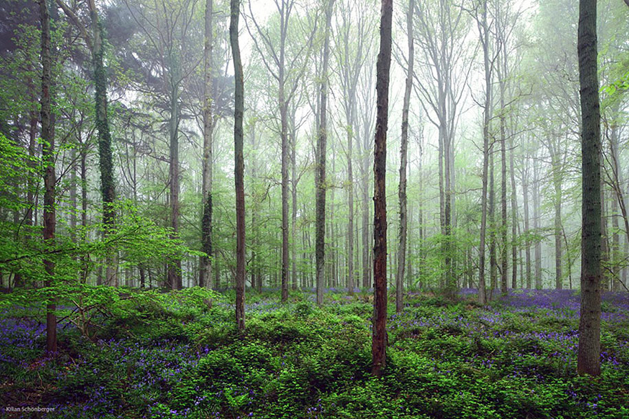 Every spring this forest in Belgium becomes a blue Wonderland 11