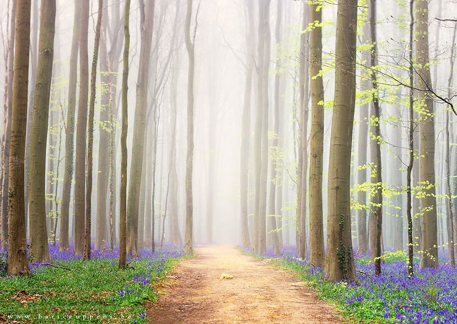 Every spring this forest in Belgium becomes a blue Wonderland 12