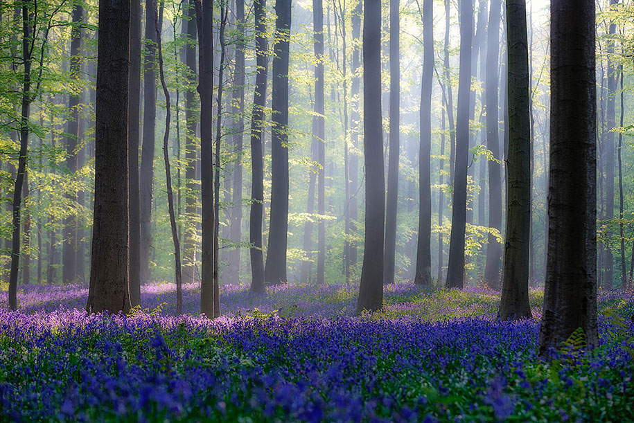 Every spring this forest in Belgium becomes a blue Wonderland 14