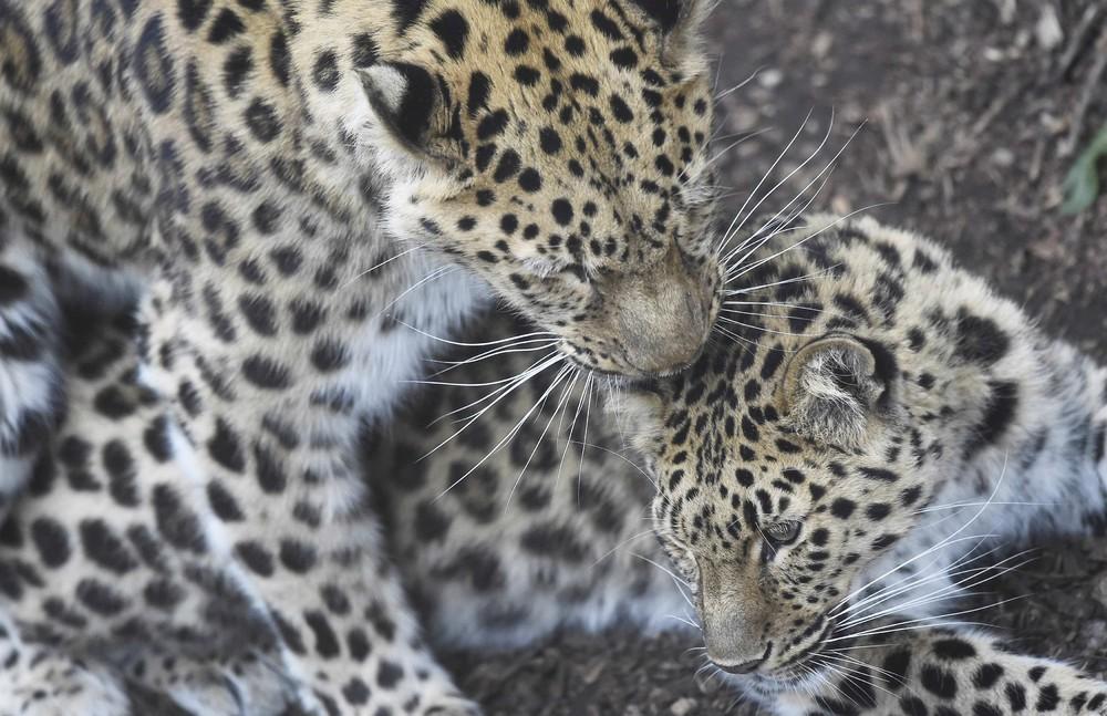 Interesting photos with animals 23