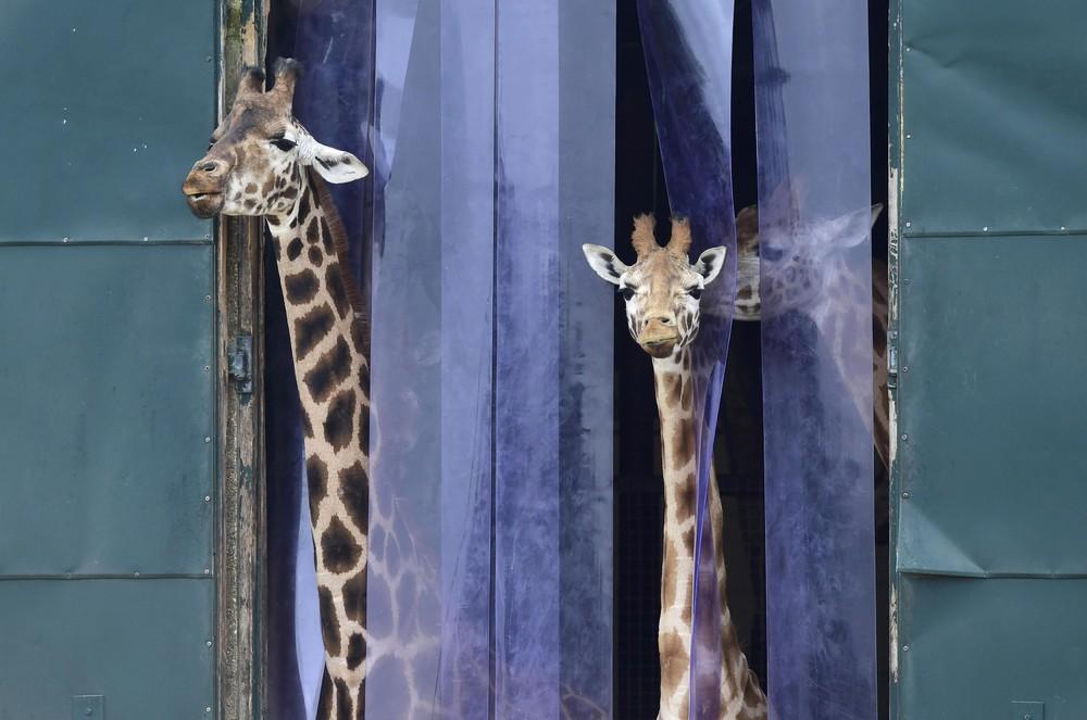 Interesting photos with animals 26