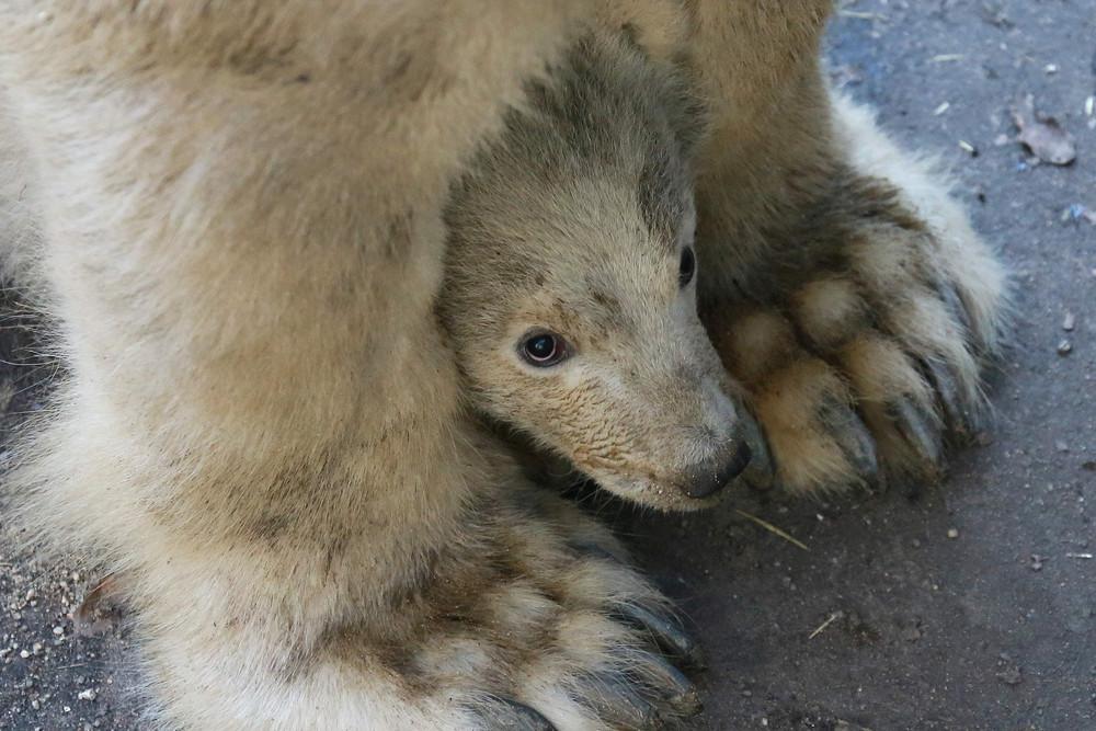 Interesting photos with animals 29