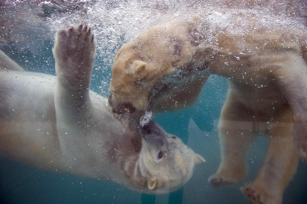 Interesting photos with animals 33