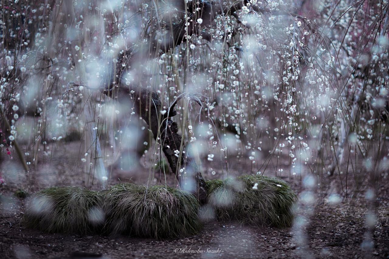 Волшебная весна в Японии