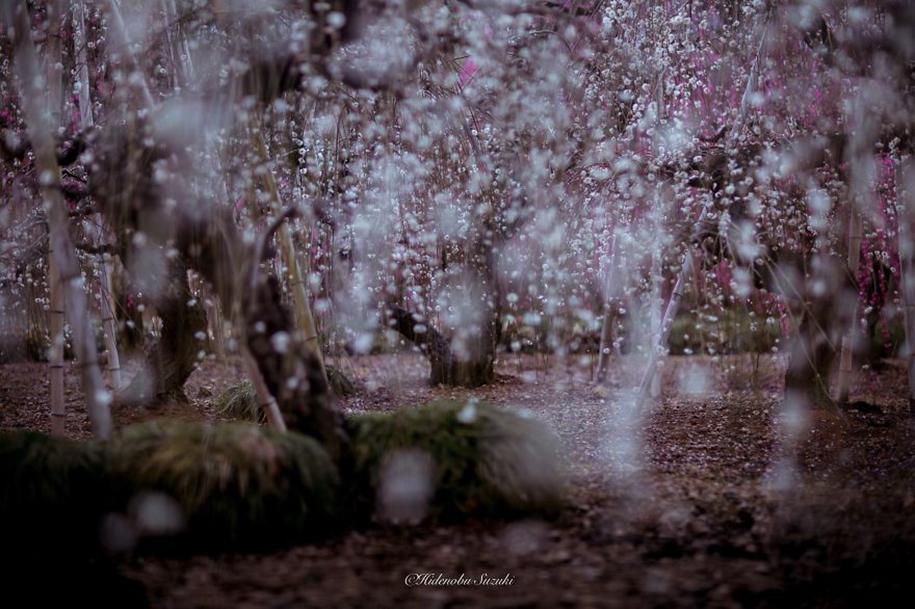 Magic spring in Japan 02