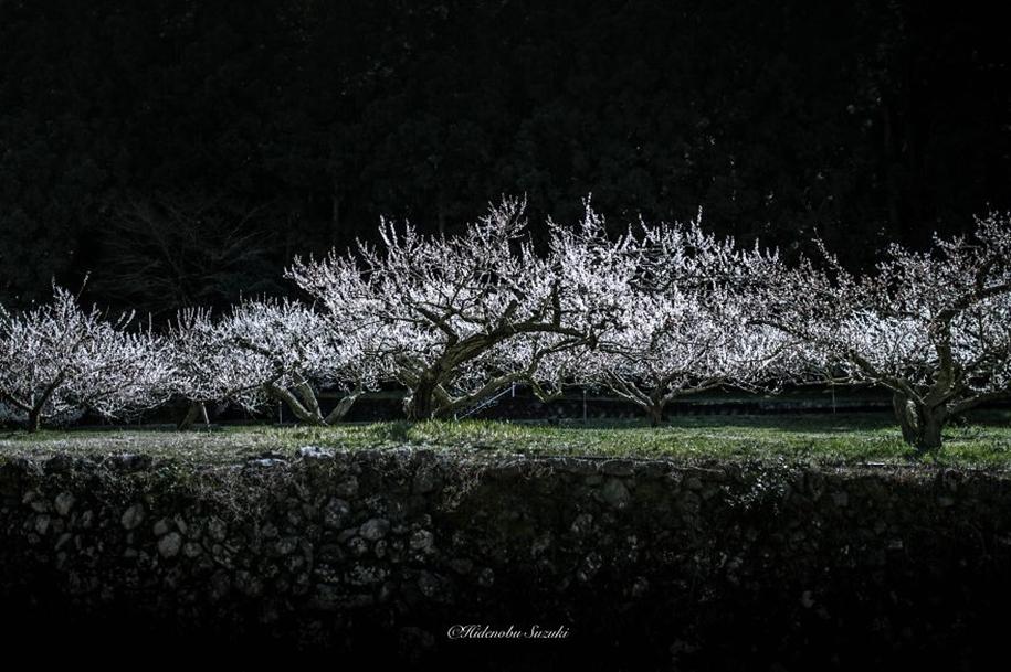 Magic spring in Japan 03