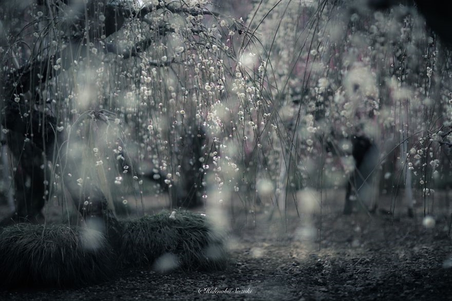 Magic spring in Japan 05
