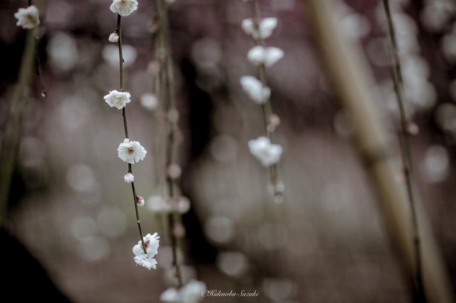 Magic spring in Japan 06