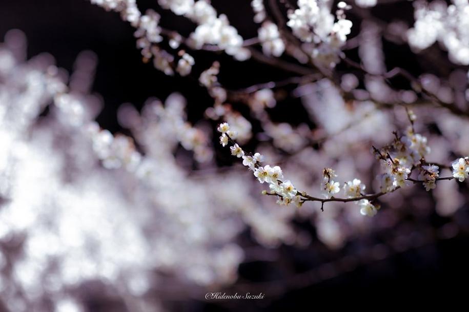 Magic spring in Japan 09