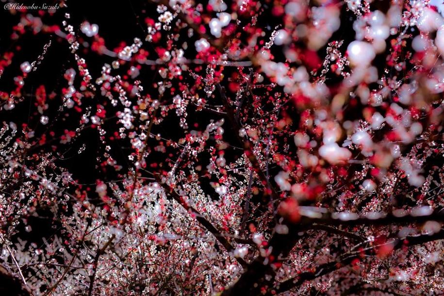 Magic spring in Japan 10