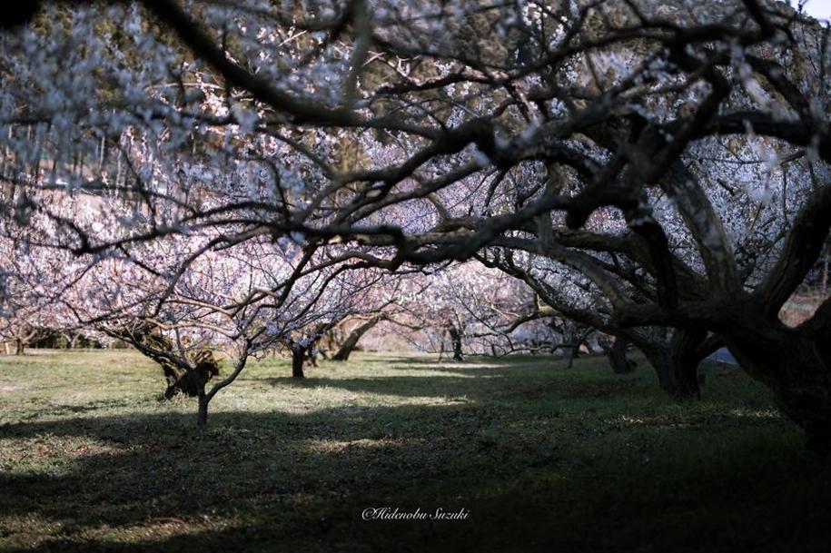 Magic spring in Japan 11