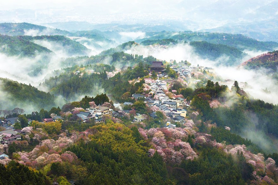 Magical pictures of Japanese cherry trees from National Geographic 03