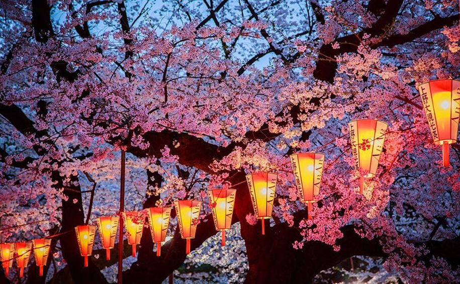 Magical pictures of Japanese cherry trees from National Geographic 04
