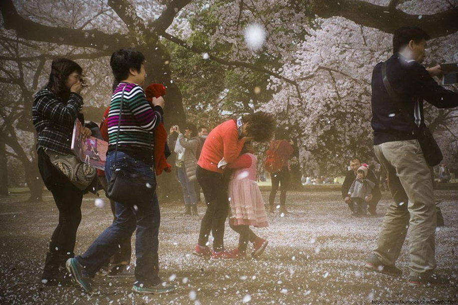 Magical pictures of Japanese cherry trees from National Geographic 15