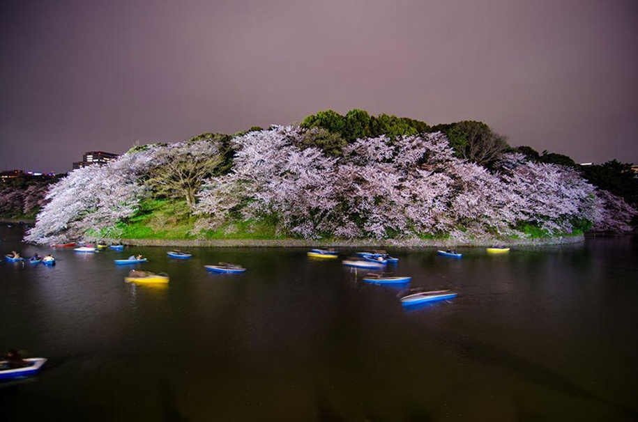 Magical pictures of Japanese cherry trees from National Geographic 16