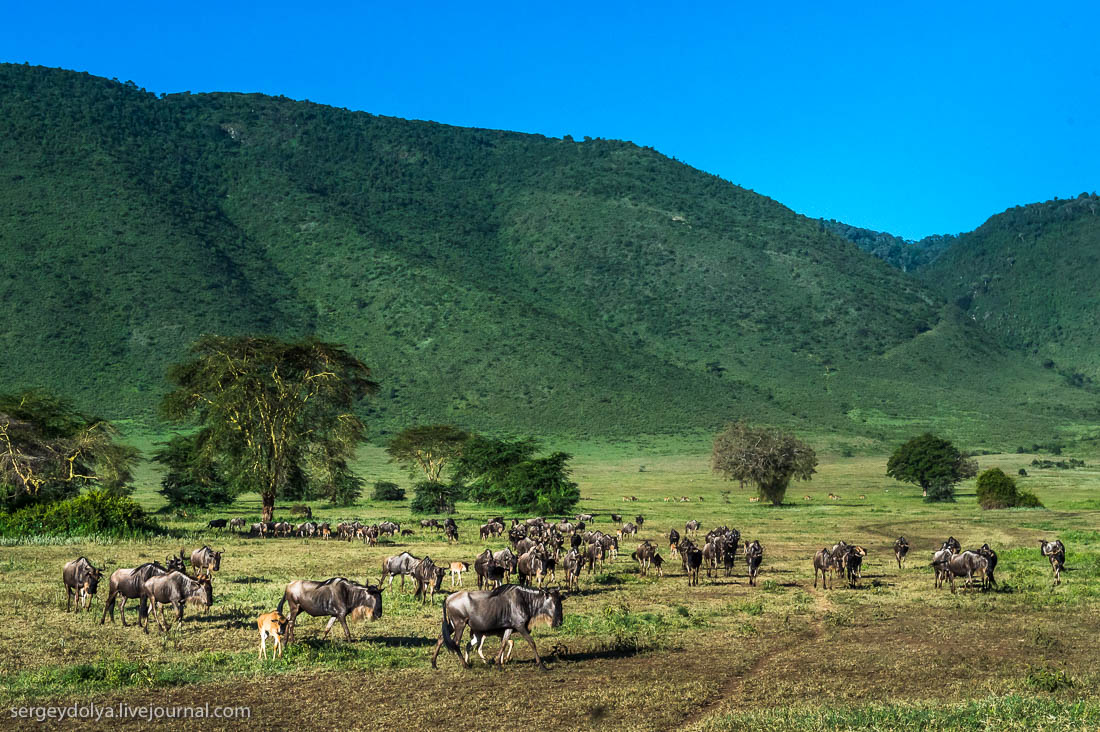 Ngorongoro is the best Safari in Africa 01